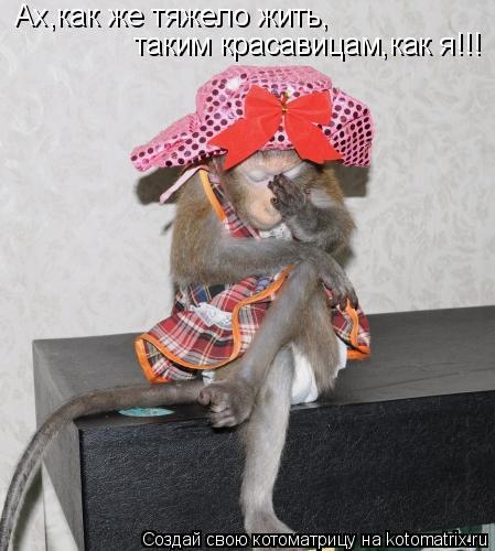 Котоматрица: Ах,как же тяжело жить, таким красавицам,как я!!!