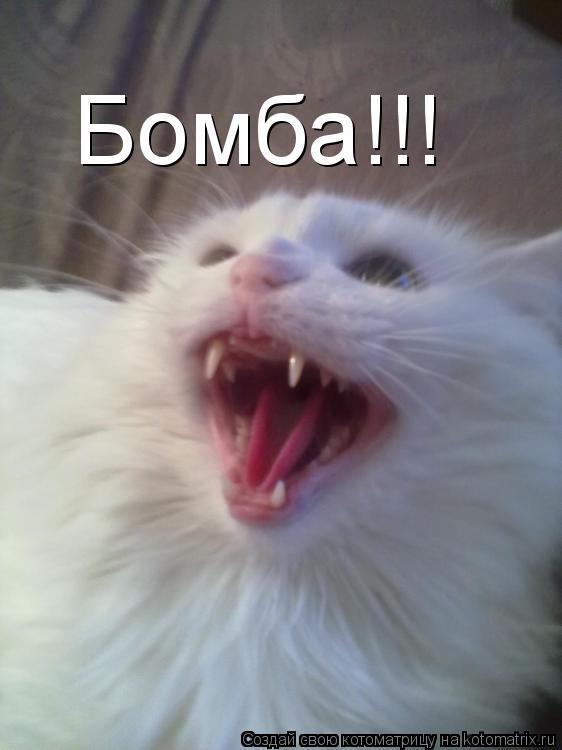 Котоматрица: Бомба!!!