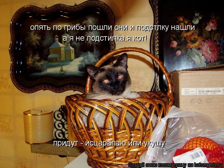 Котоматрица: опять по грибы пошли они и подстлку нашли а я не подстилка,я кот! придут - исцарапаю или укушу