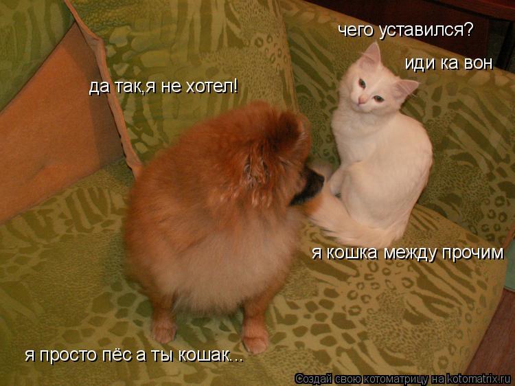 Котоматрица: чего уставился? да так,я не хотел! я просто пёс а ты кошак... я кошка между прочим иди ка вон