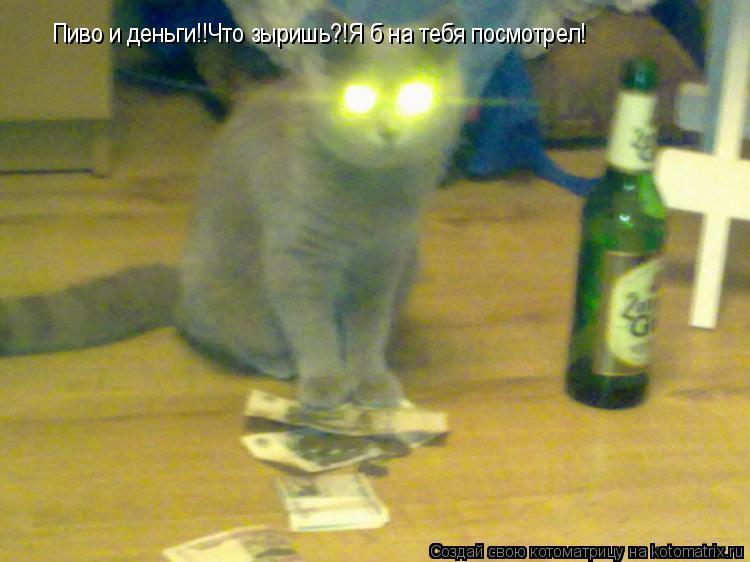 Котоматрица: Пиво и деньги!!Что зыришь?!Я б на тебя посмотрел!