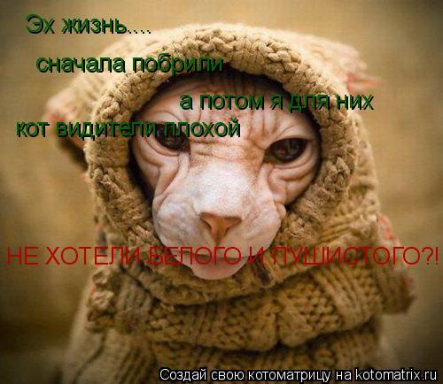 Котоматрица: Эх жизнь.... сначала побрили а потом я для них кот видители плохой НЕ ХОТЕЛИ БЕЛОГО И ПУШИСТОГО?!