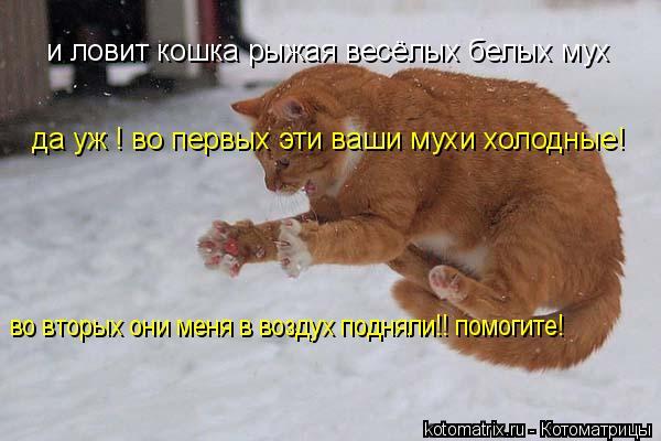 Котоматрица: и ловит кошка рыжая весёлых белых мух да уж ! во первых эти ваши мухи холодные! во вторых они меня в воздух подняли!! помогите!