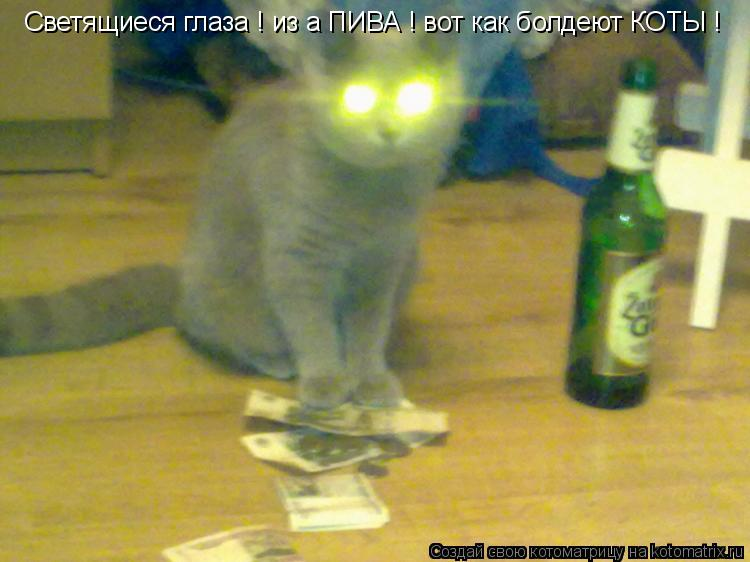 Котоматрица: Светящиеся глаза ! из а ПИВА ! вот как болдеют КОТЫ !
