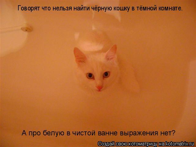 Котоматрица: Говорят что нельзя найти чёрную кошку в тёмной комнате. А про белую в чистой ванне выражения нет?