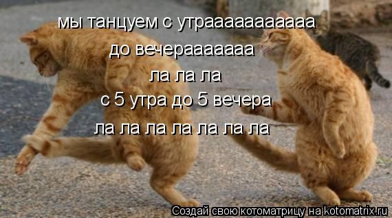 Котоматрица: мы танцуем с утрааааааааааа до вечерааааааа ла ла ла с 5 утра до 5 вечера ла ла ла ла ла ла ла