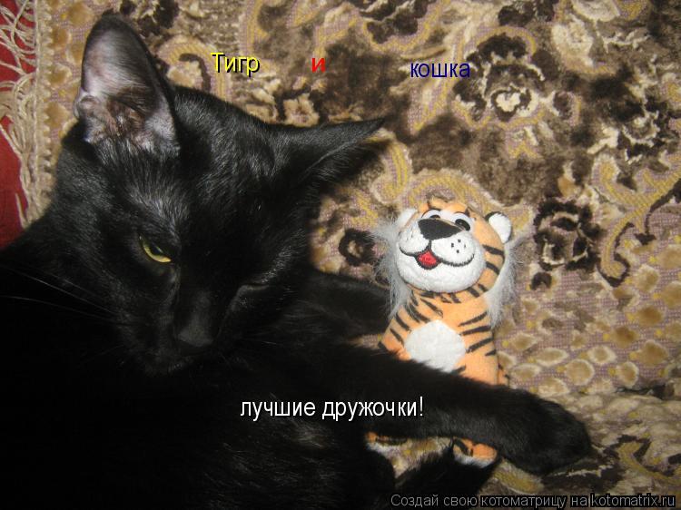 Котоматрица: Тигр  и  кошка  лучшие дружочки!