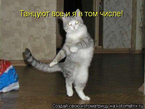 Котоматрица: Танцуют все,и я в том числе!