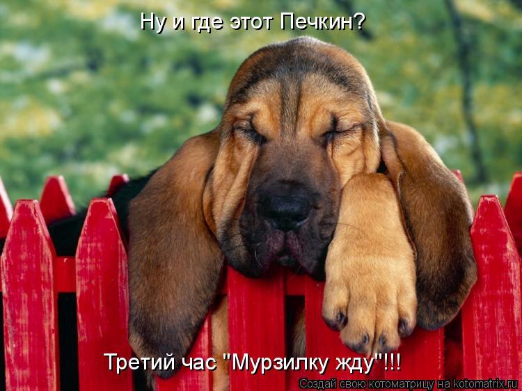 """Котоматрица: Ну и где этот Печкин? Третий час """"Мурзилку жду""""!!!"""