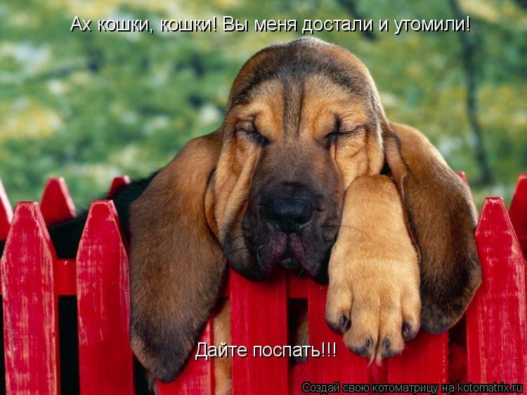 Котоматрица: Ах кошки, кошки! Вы меня достали и утомили! Дайте поспать!!!
