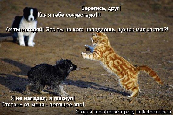 Котоматрица: Ах ты негодяй! Это ты на кого нападаешь, щенок-малолетка?! Я не нападал, я гавкнул!  Отстань от меня - летящее зло! Как я тебе сочувствую!!! Берег