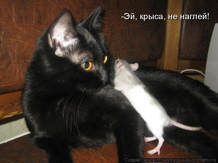 Котоматрица: -Эй, крыса, не наглей!