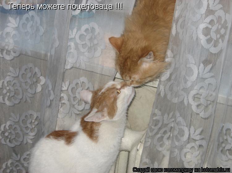 Котоматрица: Теперь можете поцеловаца !!!