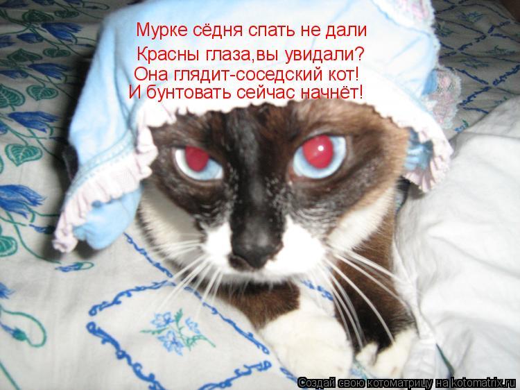 Котоматрица: Мурке сёдня спать не дали Красны глаза,вы увидали? Она глядит-соседский кот! И бунтовать сейчас начнёт!