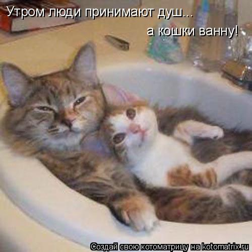Котоматрица: Утром люди принимают душ... а кошки ванну!