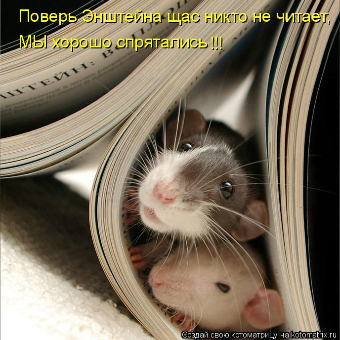 Котоматрица: Поверь Энштейна щас никто не читает, МЫ хорошо спрятались !!!