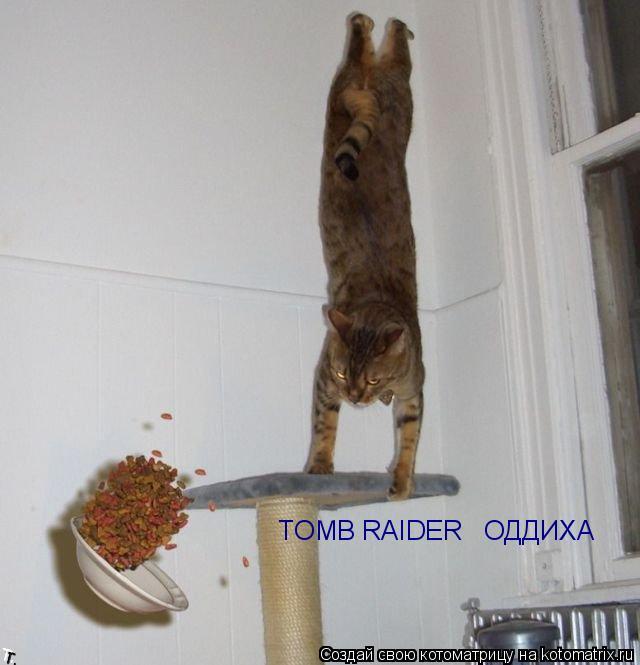 Котоматрица: TOMB RAIDER   ОДДИХАЄ