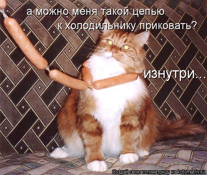Котоматрица: а можно меня такой цепью к холодильнику приковать? изнутри...