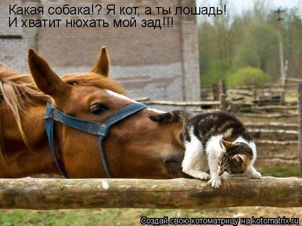 Кот собака лошадь