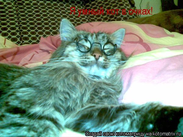 Котоматрица: Я умный кот в очках! Я умный кот в очках!