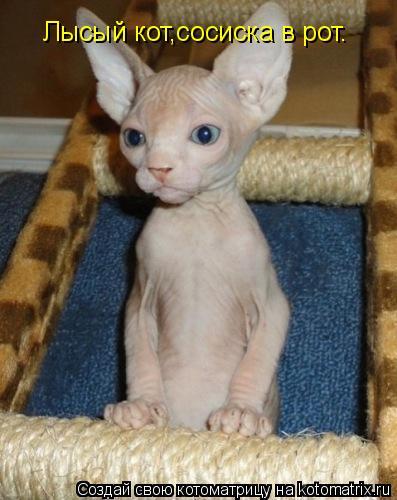 Котоматрица: Ужасный кот,сосиска в рот. Лысый кот,сосиска в рот.