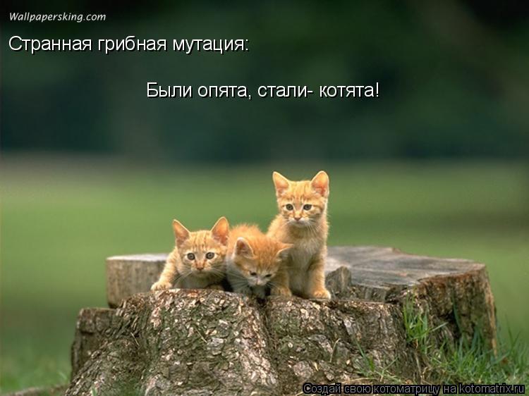 Котоматрица: Странная грибная мутация: Были опята, стали- котята!