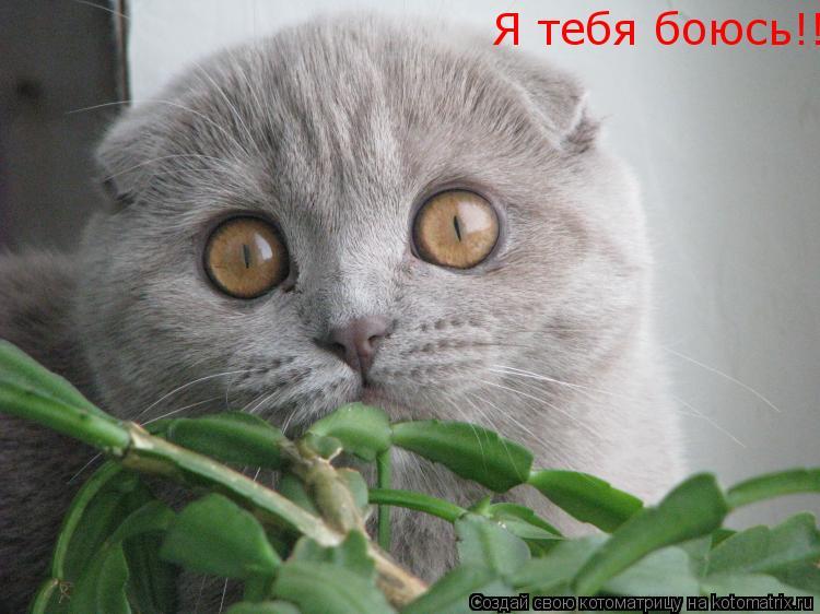 Котоматрица: Я тебя боюсь!!!
