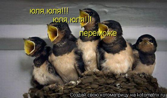 Котоматрица: юля,юля!!! юля,юля!!! переможе
