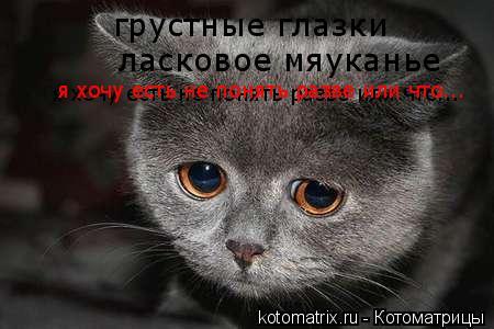 Котоматрица: грустные глазки ласковое мяуканье  я хочу есть не понять разве или что... я хочу есть не понять разве или что... я хочу есть не понять разве или