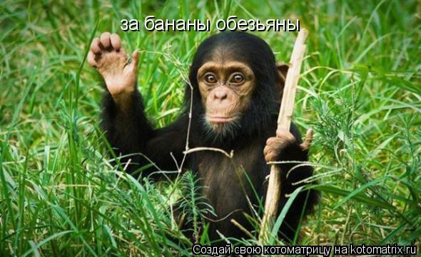 Котоматрица: за бананы обезьяны