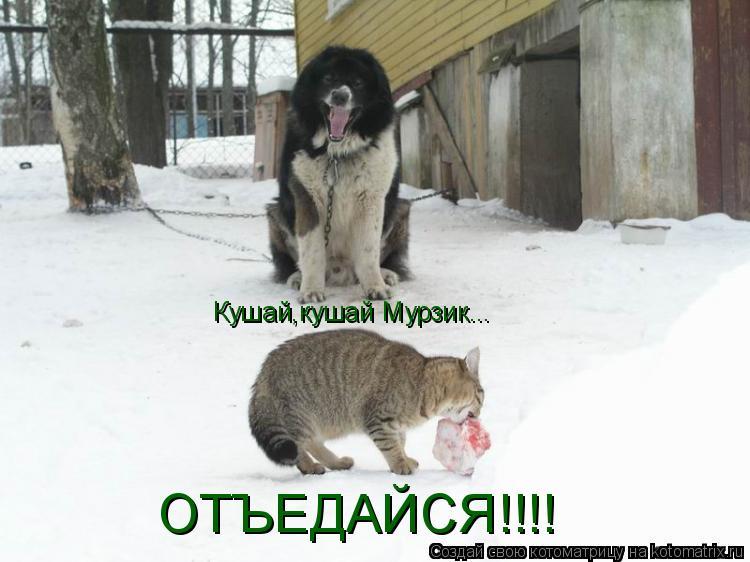 Котоматрица: Кушай,кушай Мурзик... ОТЪЕДАЙСЯ!!!!