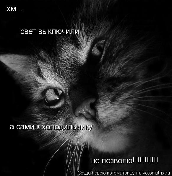 Котоматрица: хм .. свет выключили  а сами к холодильнику не позволю!!!!!!!!!!!