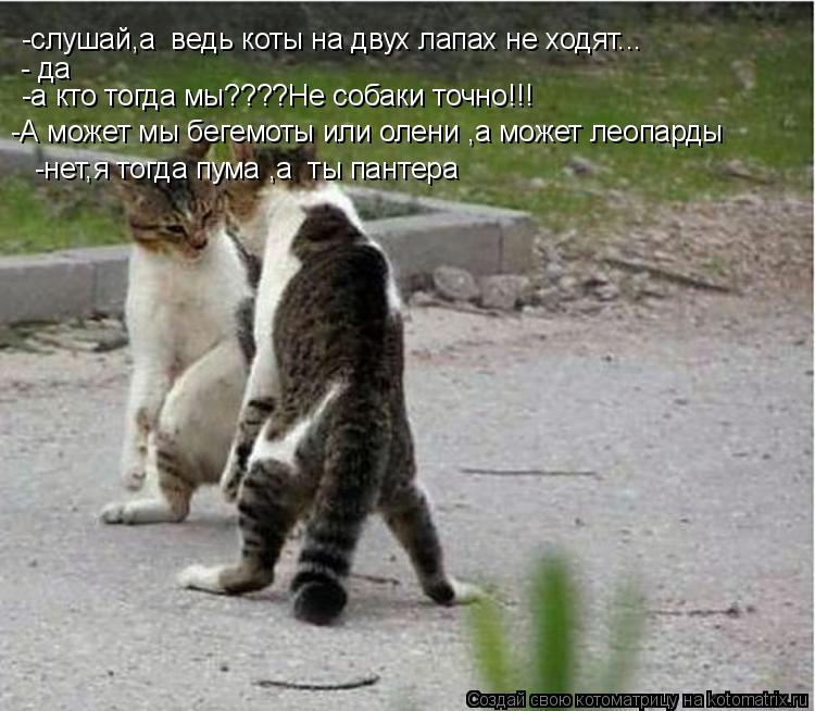 Котоматрица: -слушай,а  ведь коты на двух лапах не ходят... - да -а кто тогда мы????Не собаки точно!!! -А может мы бегемоты или олени ,а может леопарды -нет,я тогд
