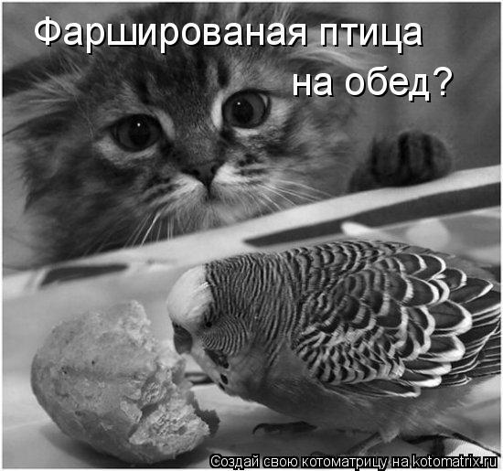 Котоматрица: Фаршированая птица на обед?