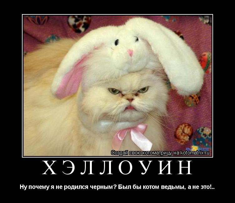 Котоматрица: Хэллоуин Ну почему я не родился черным? Был бы котом ведьмы, а не это!..