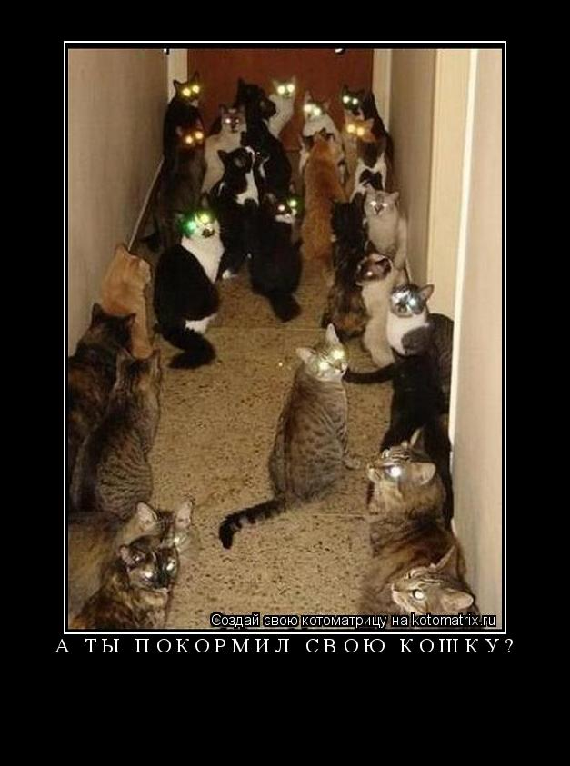 Котоматрица: а Ты покормил свою Кошку?