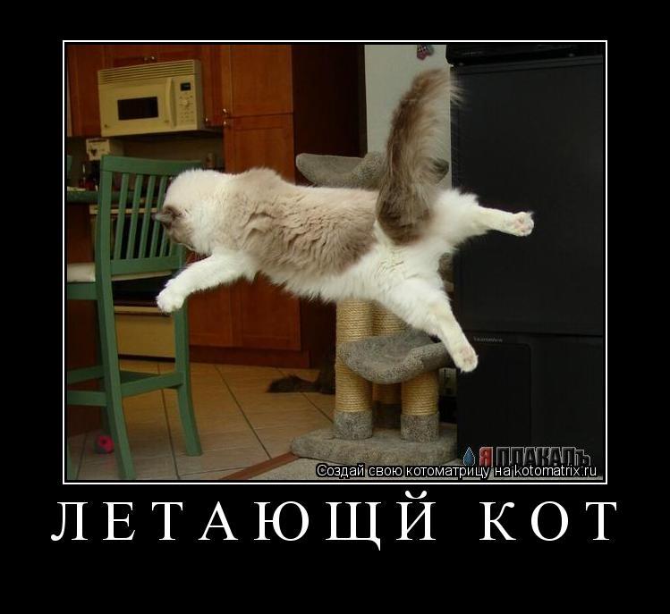 Котоматрица: Летающй кот