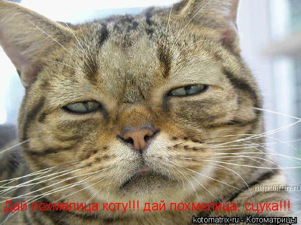 Котоматрица: Дай похмелица коту!!! дай похмелица, сцука!!!