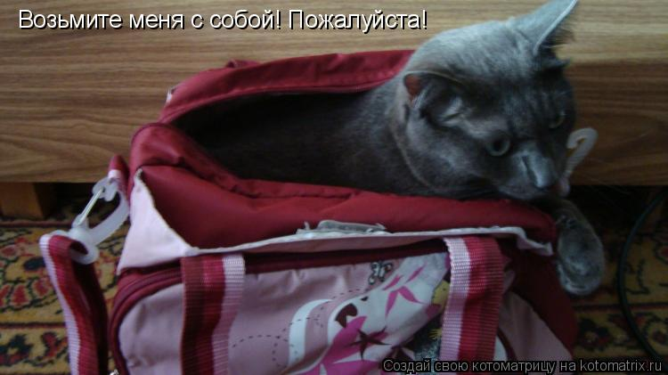 Котоматрица: Возьмите меня с собой! Пожалуйста!