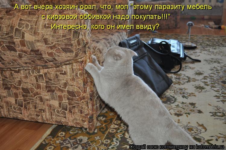 """Котоматрица: А вот вчера хозяин орал, что, мол """"этому паразиту мебель  с кирзовой оббивкой надо покупать!!!""""  Интересно, кого он имел ввиду?"""