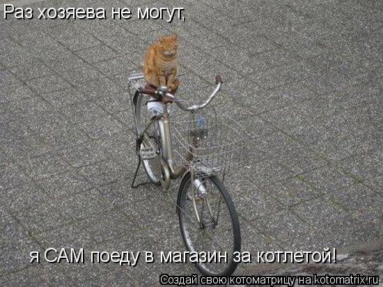Котоматрица: Раз хозяева не могут, я САМ поеду в магазин за котлетой!