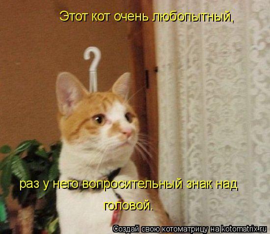 Котоматрица: Этот кот очень любопытный, раз у него вопросительный знак над  головой.