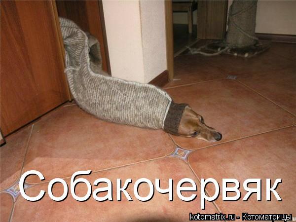 Котоматрица: Собакочервяк