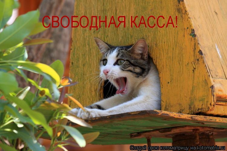 Котоматрица: СВОБОДНАЯ КАССА!