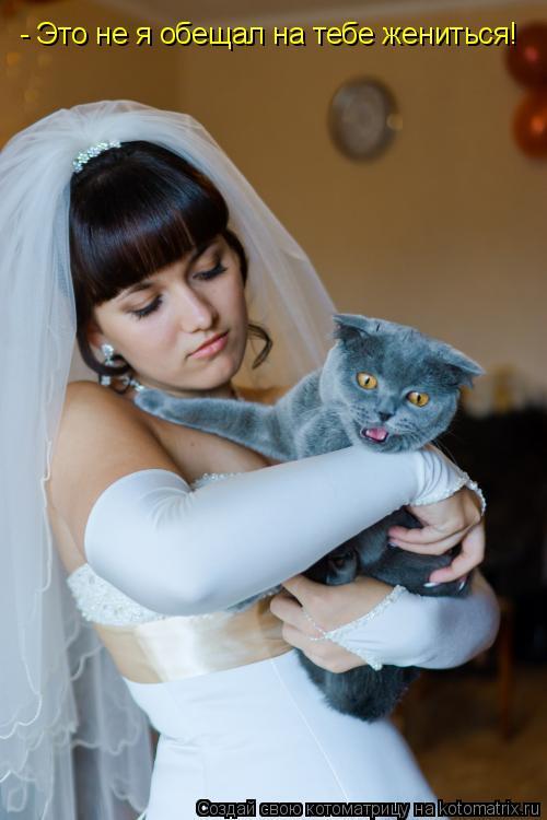 Котоматрица: - Это не я обещал на тебе жениться!