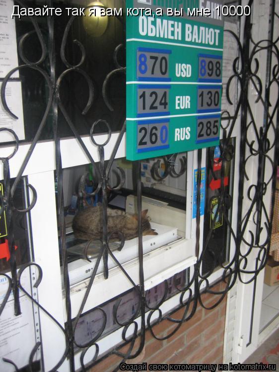 Котоматрица: Давайте так я вам кота,а вы мне 10000