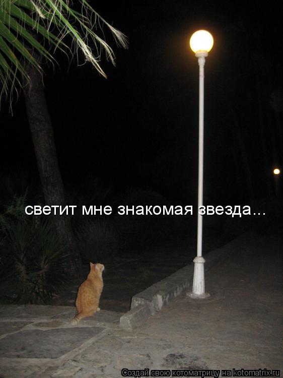 Котоматрица: светит мне знакомая звезда...