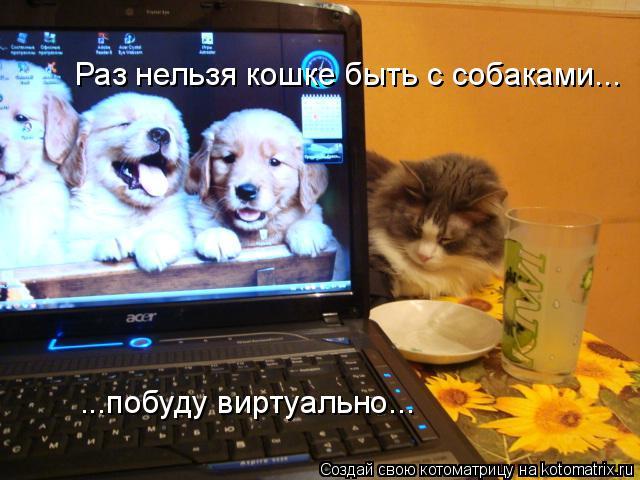 Котоматрица: Раз нельзя кошке быть с собаками... ...побуду виртуально...
