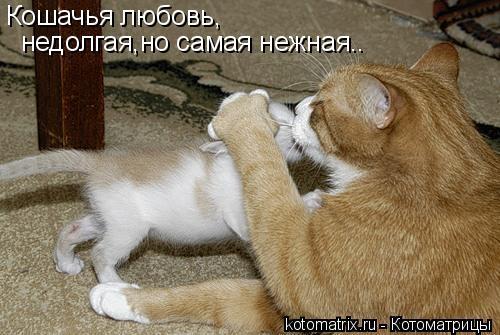 Котоматрица: Кошачья любовь, недолгая,но самая нежная..