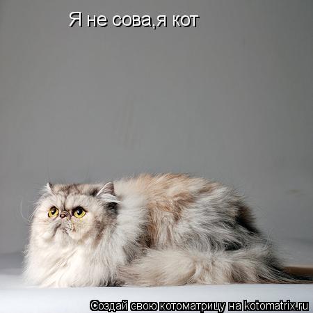 Котоматрица: Я не сова,я кот